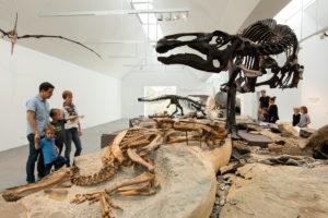 Neues Naturmuseum in St.Gallen eröffnet